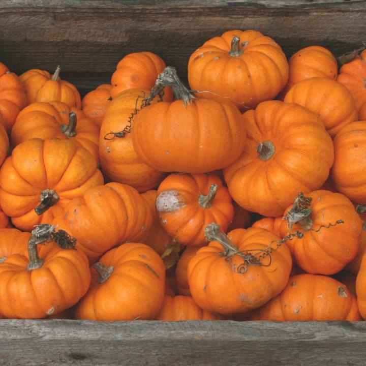 Halloween Brunch - Hideway Kitchen at The Dunsforth